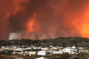 4 Charities To Donate To For The Australian Wildfires